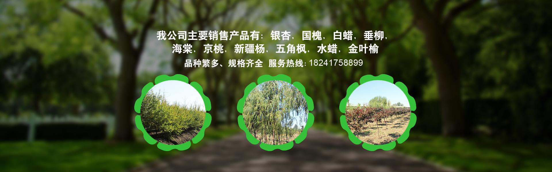 辽宁新疆杨